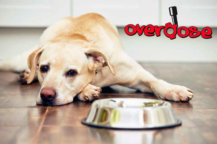 Tramadol Overdose in Dogs