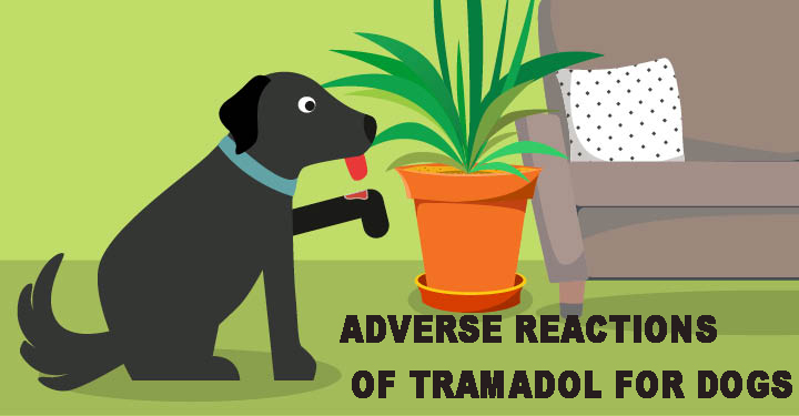 Adverse Reactions of Tramadol for Dogs